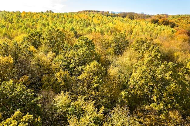 Top-down luchtfoto van groene en gele luifels in herfst bos.