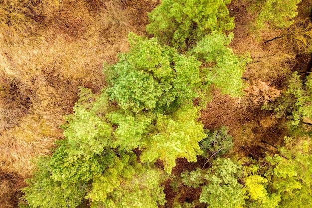 Top-down luchtfoto van groene zomer bos met veel verse bomen.