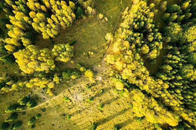 Top-down luchtfoto van heldergroene sparren en gele herfst bomen in herfst bos.