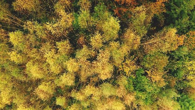 Top-down luchtfoto zon kleurrijke bergbos op heuvel
