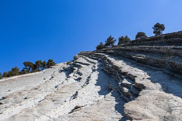 Top van een klif met bomen tegen een heldere blauwe hemel in het wilde strand. steile helling en pijnbomen. de badplaats gelendzhik. rusland, kust van de zwarte zee