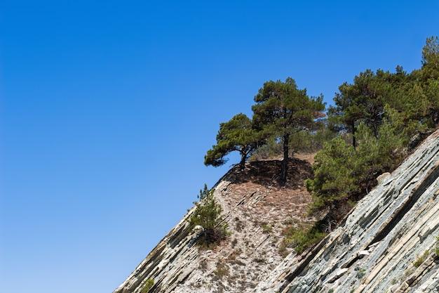 Top van een klif met bomen tegen een heldere blauwe hemel in het wilde strand