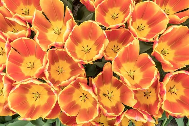 Top van prachtige oranje en gele tulpen