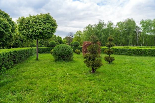 Topiary kunst in parkontwerp. bijgesneden bomen en struiken in een zomer stadspark. groenblijvend landschapspark.