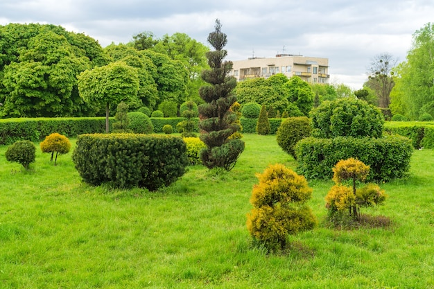 Topiary kunst in parkontwerp. bijgesneden bomen en struiken in een zomer stadspark. groenblijvend landschapspark