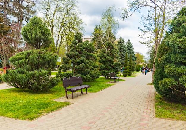 Topiary kunst van jeneverbessen, taxus taxus baccata en thuja in herfst stadsstraat. gevormde evergreens in het resortgebied van goryachiy klyuch. natuurconcept voor ontwerp. selectieve focus
