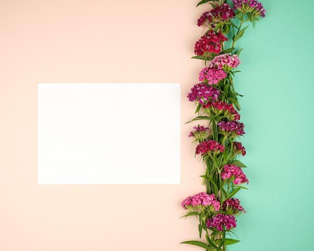 Toppen van de bloeiende turkse anjer en een leeg wit vel papier