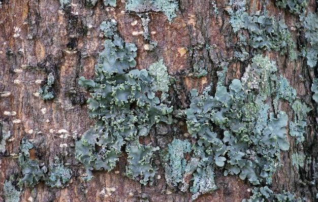Tosca groene paddestoelen op boomstammen.
