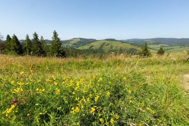 Tot bloei komende open plek tegen bergketen. zomerlandschap in de bergen van de karpaten.