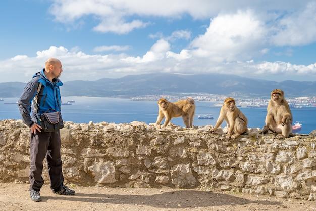 Tourista provoceert de apen op de weg in het natuurgebied