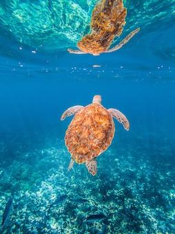Tourtle onderwater