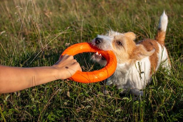 Touwtje oranje speelgoedringen met jack russell terrier.