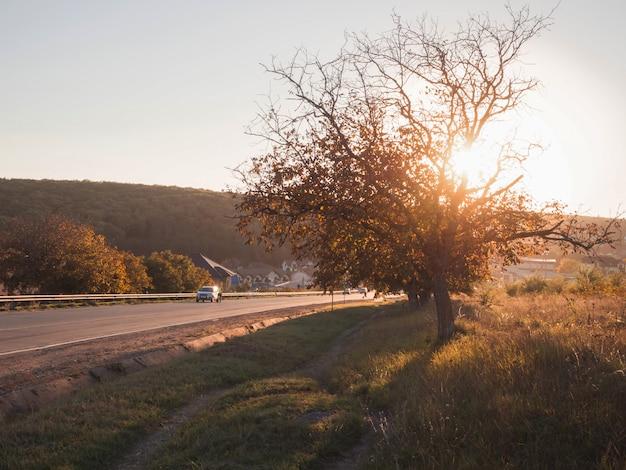 Track met auto's en een boom bij zonsondergang in de herfst.