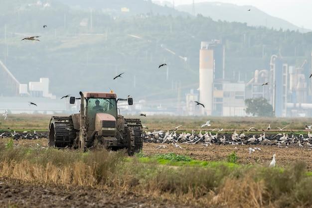Tractor ploegend padieveld onder vogels