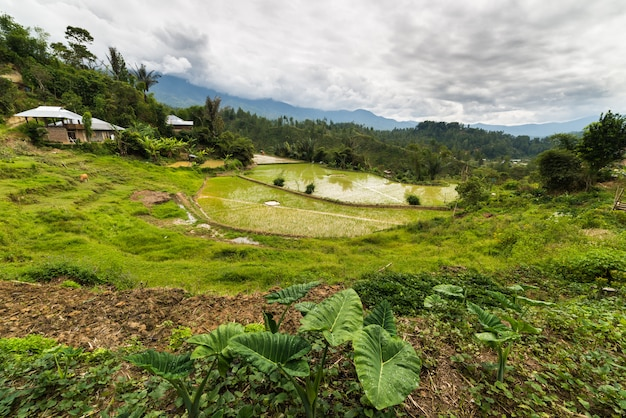 Traditioneel dorp in sulawesi indonesië
