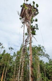 Traditioneel huis van de korovai-stam op de boom in de jungle.