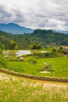 Traditioneel toraja-dorp in idyllisch landelijk landschap
