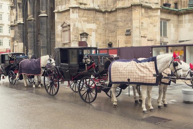 Traditioneel vervoer van twee paarden op de oude straat in wenen oostenrijk hoofden van paarden in harnas
