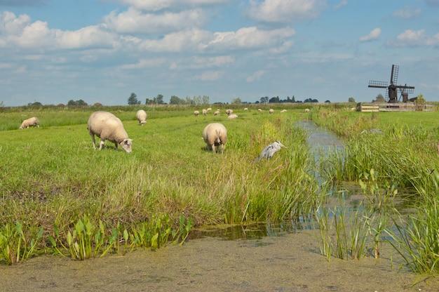 Traditionele nederlandse windmolen in de buurt van volendam, holland