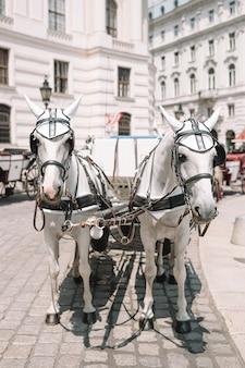 Traditionele paardencoach fiaker in wenen
