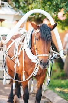 Traditionele paardenkoetsier in europa
