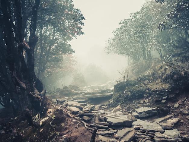 Trail door een mysterieus donker bos in mist. herfst ochtend in himalaya, nepal. magische sfeer. sprookje