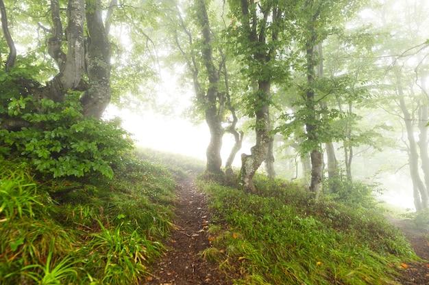 Trail in de mornigwoods die in de ochtendmist verdwijnen