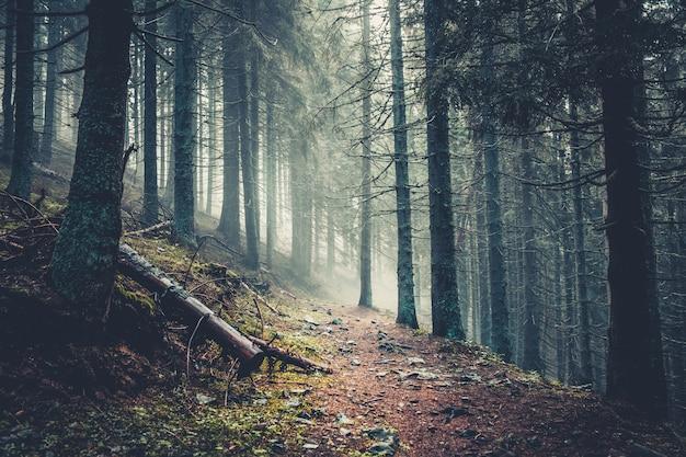 Trail in een donker dennenbos