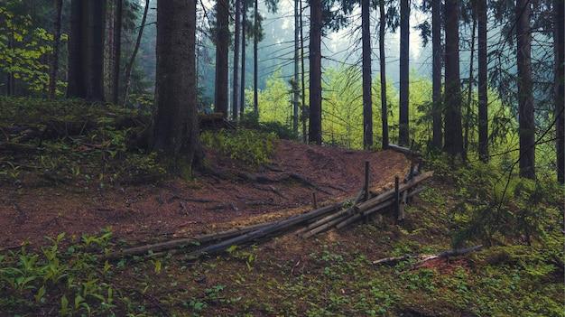 Trail in het oude prachtige sparrenbos op een zomeravond