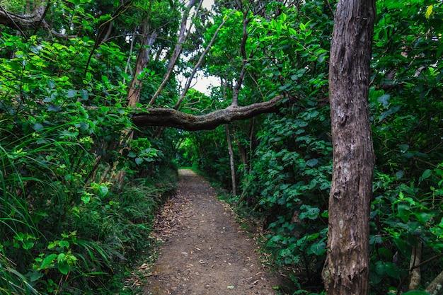 Trail in nieuw-zeeland bos in de buurt van auckland