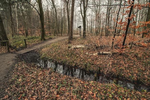 Traject in een bos bedekt met bomen in de herfst