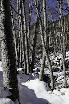 Traject in een bos omgeven door stenen en bomen bedekt met sneeuw onder een blauwe hemel