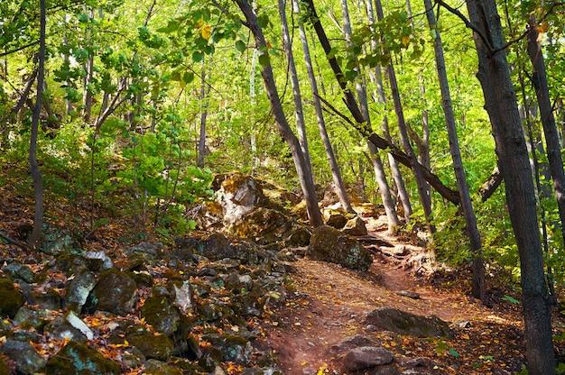 Traject in een groen bos. bosbeschermingsgebied. natuurpark.
