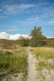 Traject in een veld bedekt met gras en bomen onder een bewolkte hemel en zonlicht