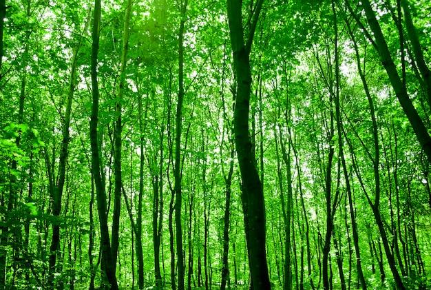 Traject in het bos met zonlicht