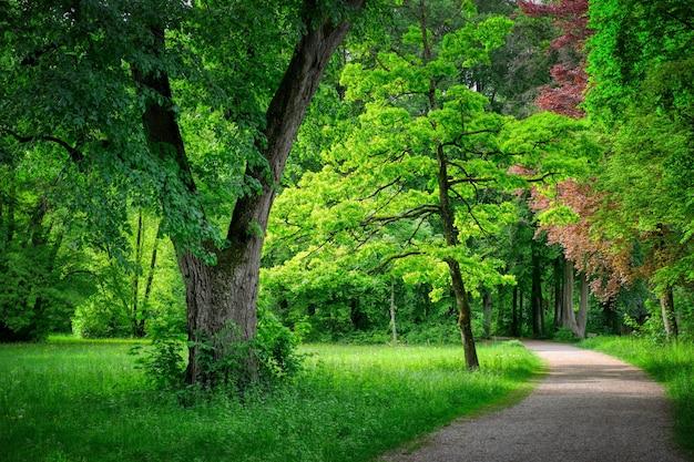 Traject omgeven door groen in een bos in het zonlicht