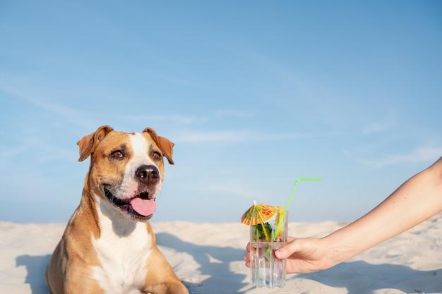 Traktatie op een glas koud cocktaildrankje op het strand.