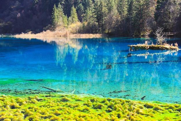 Transparant turquoise watermeer met bomen ondergedompeld in jiuzhaigou national park in sichuan