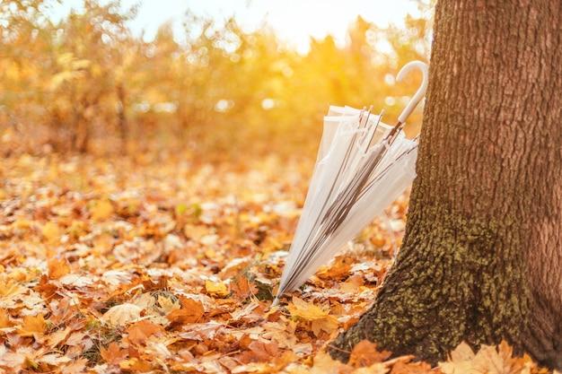 Transparante paraplu achtergelaten in de buurt van een herfstboom in een stadspark. regenachtig weerconcept.