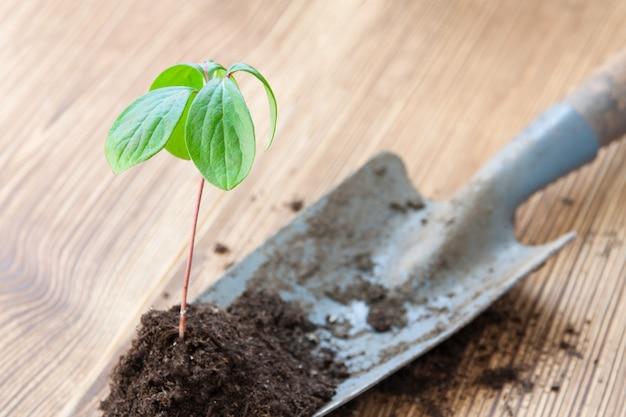 Transplantatie van jonge groene spruit door tuinschop in de lente op bruine achtergrond