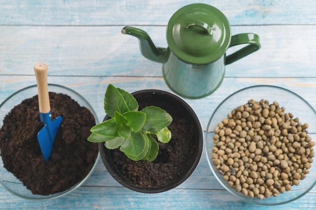 Transplanteer planten in een andere pot thuis. tuingereedschap voor thuis.