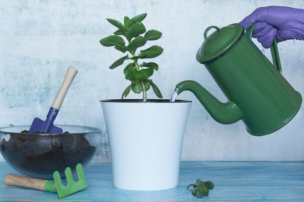 Transplanteer planten in een andere pot thuis. zelfgemaakt stilleven voor tuinieren.