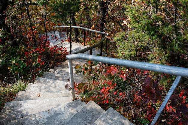 Trappen leiden naar beneden door het bos.