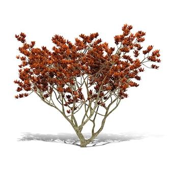Tree 3d-rendering
