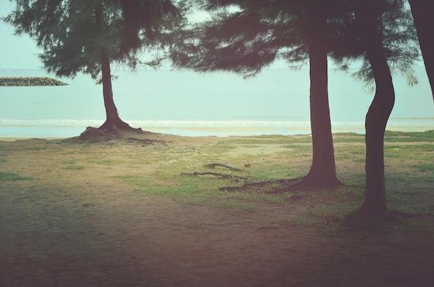Tree beach ocean coastline nature