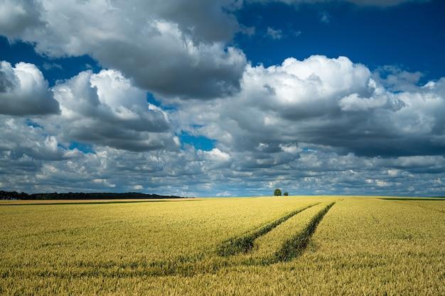 Trekkersporen in een tarweveld in een landelijk gebied onder de bewolkte hemel