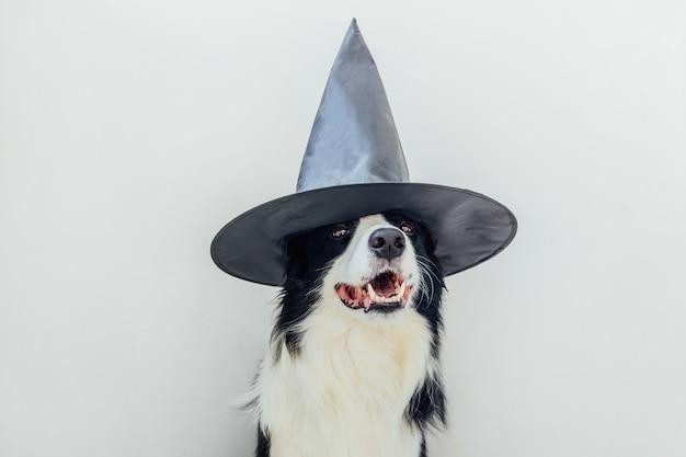 Trick or treat-concept. grappige puppy hond border collie gekleed in halloween hoed heks kostuum eng en spookachtig geïsoleerd op een witte achtergrond. voorbereiding voor halloween-feest.