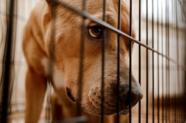 Triest uitziende hond achter het hek uitkijken door de draad van zijn kooi.