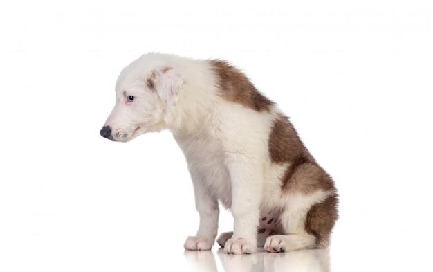 Triest verlaten puppy naar beneden te kijken