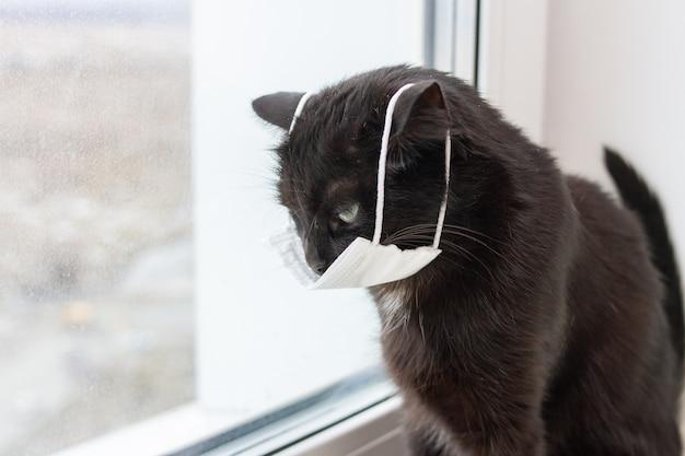 Triest zwarte kat in medisch masker zit thuis bij het raam
